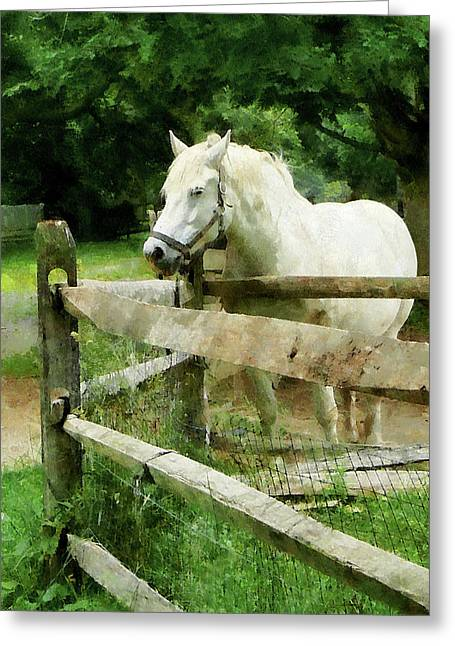 White Horse In Paddock Greeting Card
