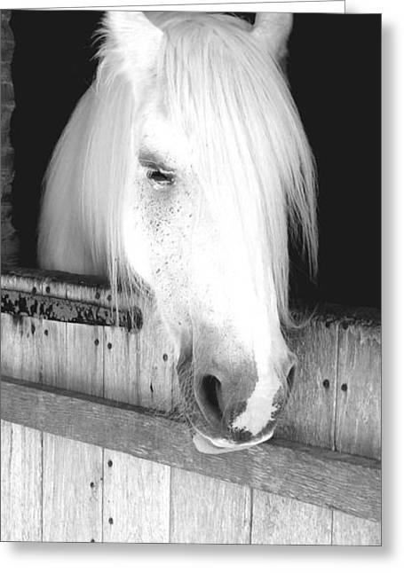 White Horse Greeting Card by Roberto Alamino