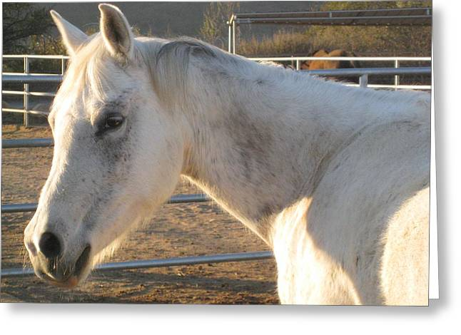 Greeting Card featuring the photograph White Horse by Sue Halstenberg