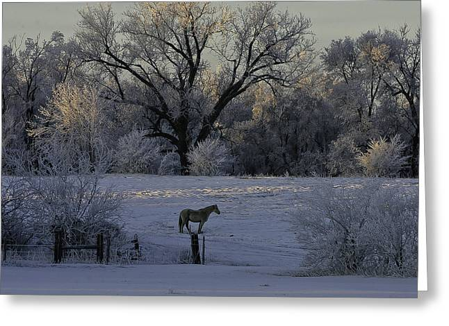 White Horse Winter Greeting Card by Kenneth McElroy
