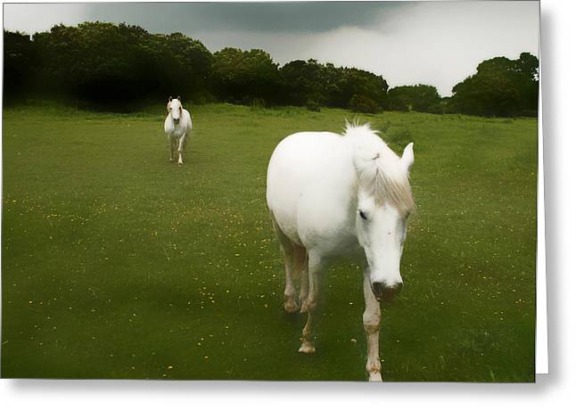 White Horses Greeting Card by Jim Painter