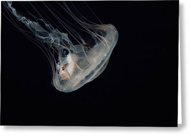 White Jelly In Black Space Greeting Card