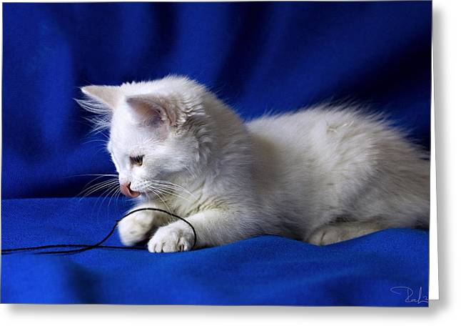 White Kitty On Blue Greeting Card