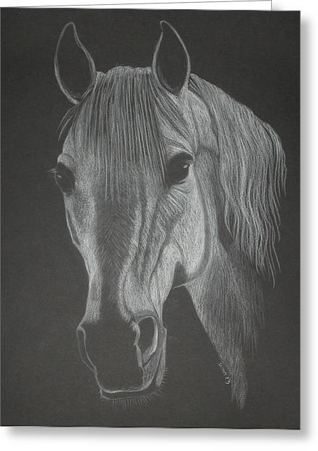 White Mare Greeting Card by Stephanie L Carr