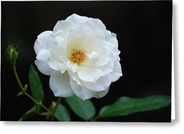 White On Black Greeting Card by Kathy Gibbons