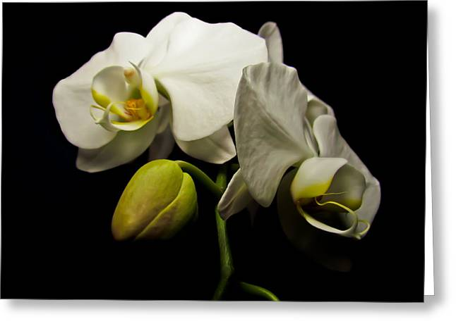 White Orchid I Greeting Card