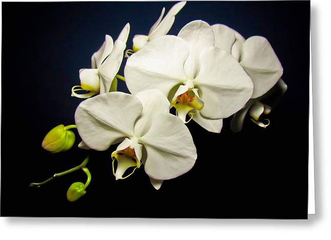 White Orchid IIi Greeting Card