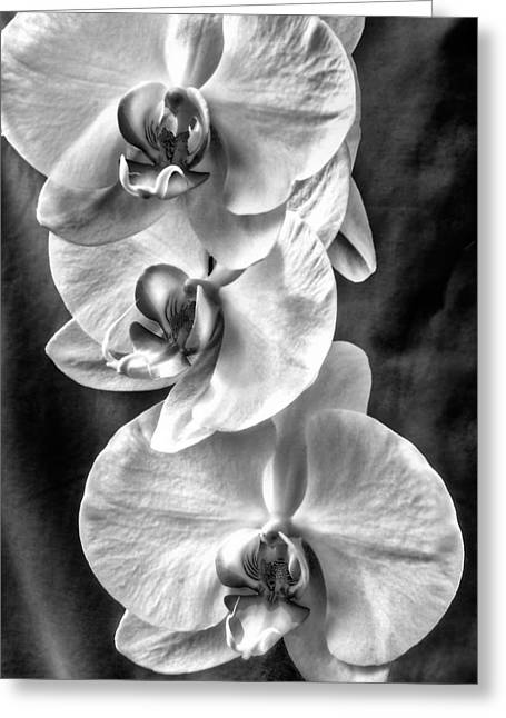 White Orchids Greeting Card by Naman Imagery