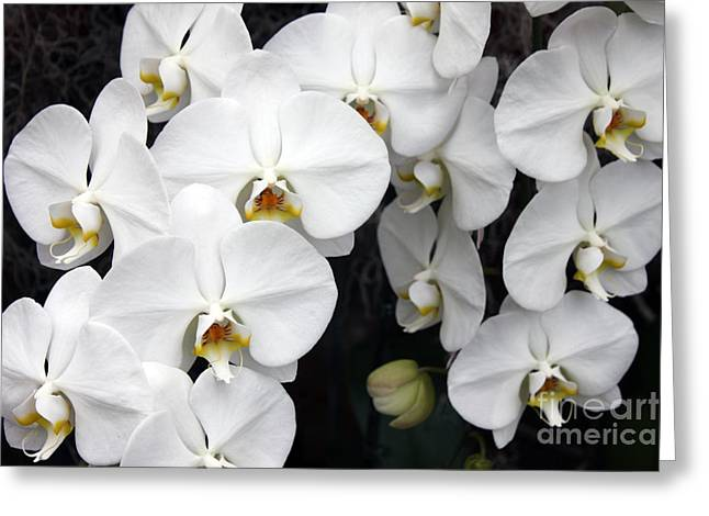 Greeting Card featuring the photograph White Orchids by Debbie Hart