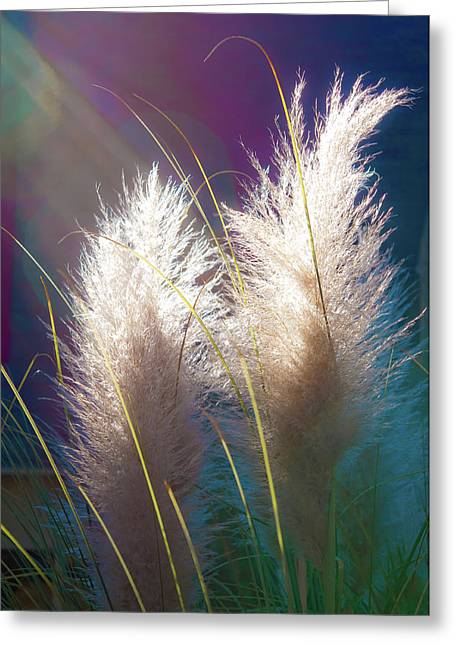 White Pampas Grass Greeting Card by Richard Marquardt