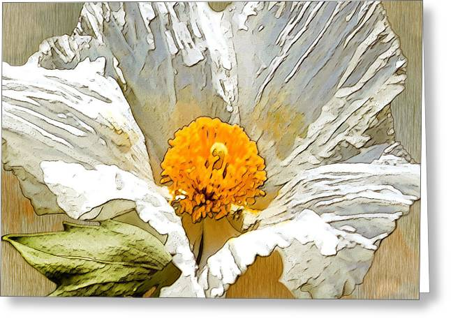 White Paper Flower Greeting Card by Artist and Photographer Laura Wrede