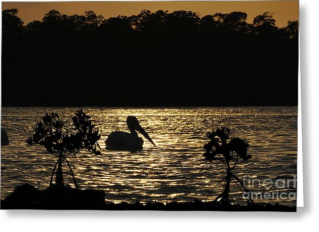 Greeting Card featuring the photograph White Pelican Evening by Dan Friend
