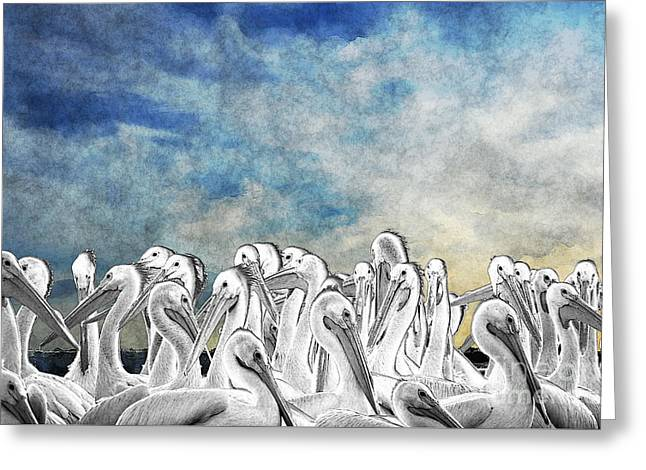 White Pelicans In Group Greeting Card by Dan Friend