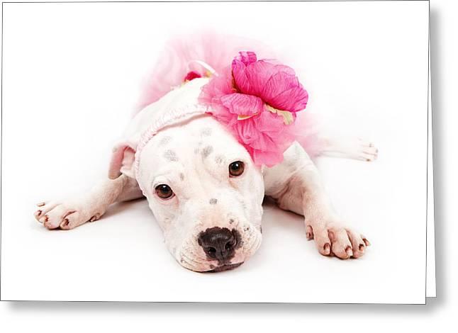 White Pit Bull Dog Wearing Pink  Greeting Card
