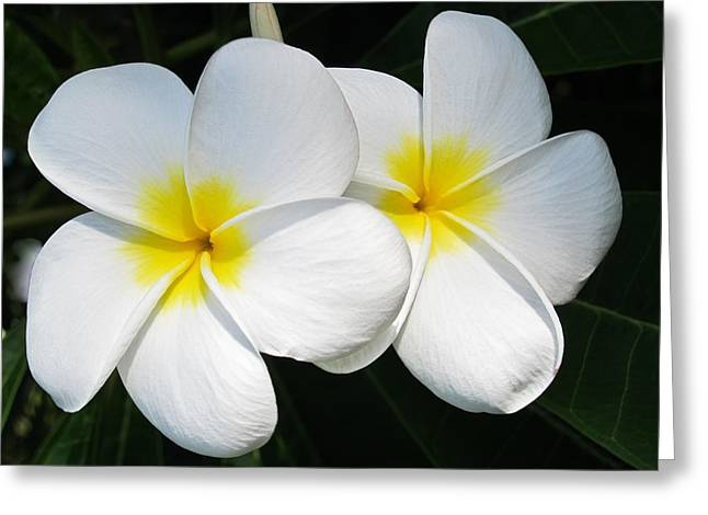 White Plumerias Greeting Card