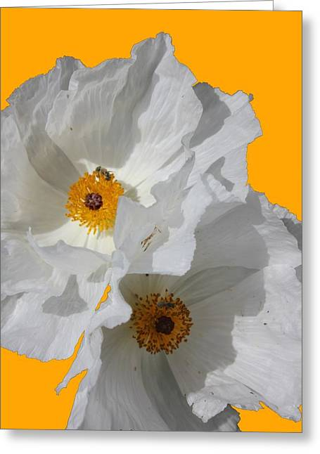 White Poppies On Yellow Greeting Card by Betty Northcutt