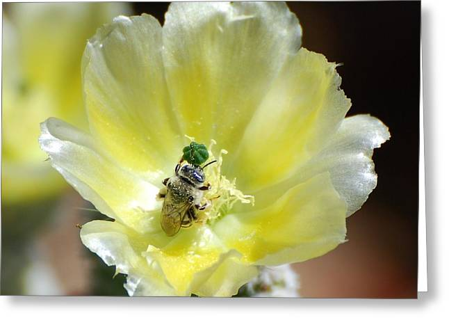 White Prickly Bee Greeting Card