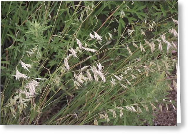 White Reeds Greeting Card