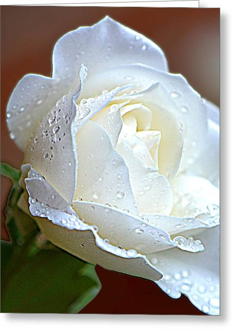 Greeting Card featuring the photograph White Rose 005 by George Bostian