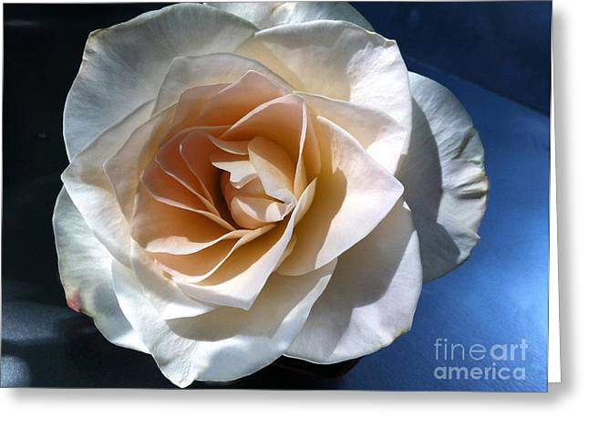 White Rose Greeting Card by Addie Hocynec