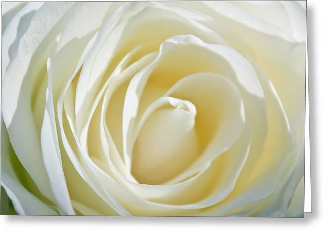 Greeting Card featuring the photograph White Rose by Ann Murphy