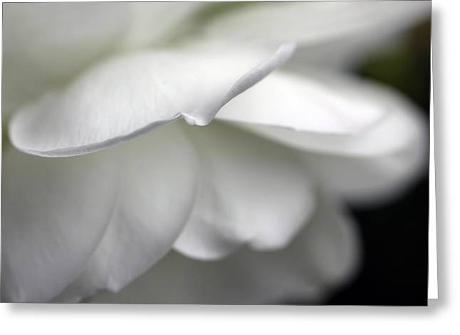 White Rose Flower Petals Greeting Card by Jennie Marie Schell