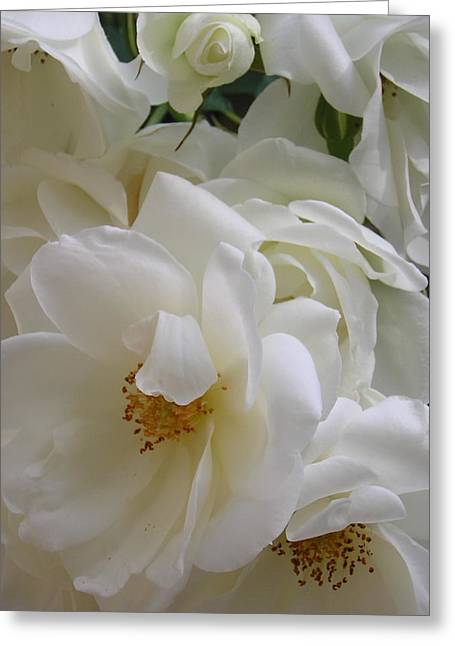 White Rose Medley Greeting Card by Tina Ann Byers