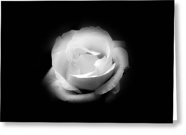 Greeting Card featuring the photograph White Rose Petals by Anthony Rego