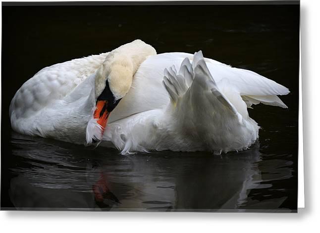 White Swan Greeting Card by Amanda Vouglas