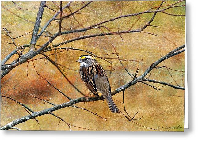 White-throated Sparrow Tweeting Greeting Card by J Larry Walker