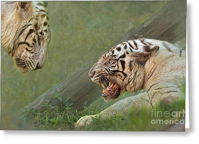 White Tiger Growling At Her Mate Greeting Card by Louise Heusinkveld