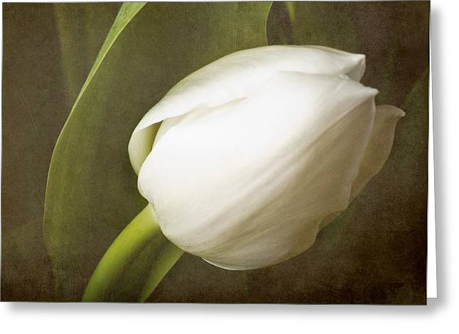 white Tulip Greeting Card by Fiona Messenger