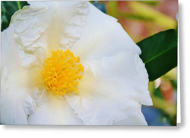White W Yellow Center Flower Greeting Card