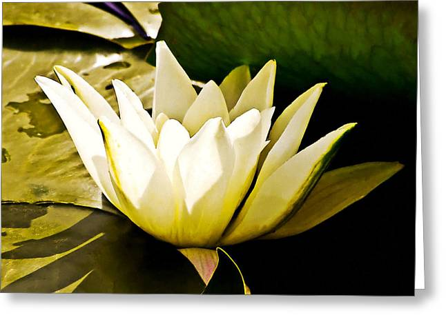 White Water Lily Greeting Card by Design Windmill