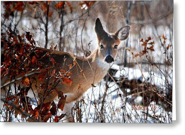 Whitetail Deer In Snow Greeting Card