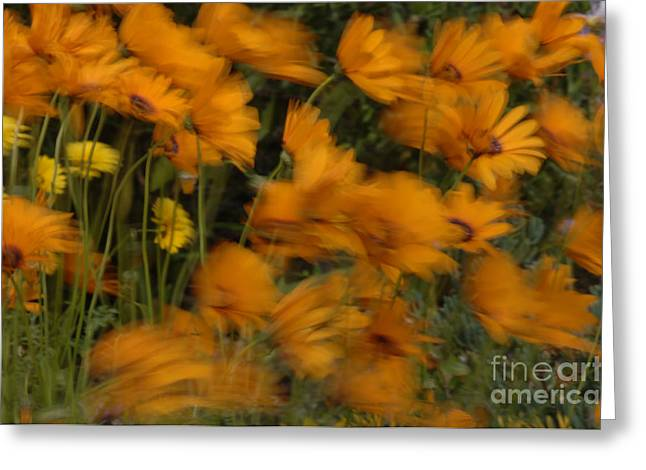Who Has Seen The Wind Greeting Card by Bob Christopher
