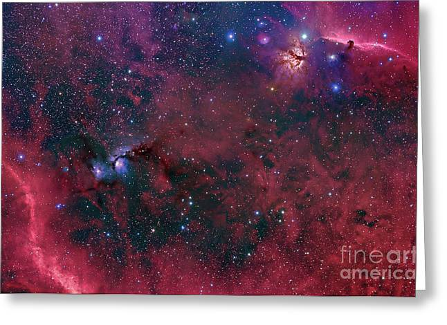 Widefield View In The Orion Greeting Card by John Davis