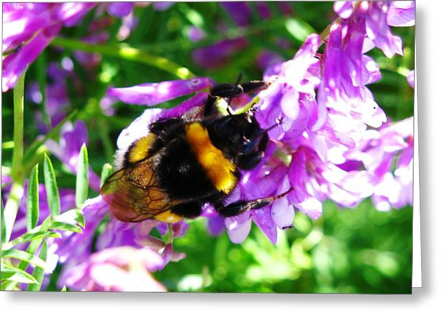 Wild Bee On Flower Greeting Card by Andonis Katanos