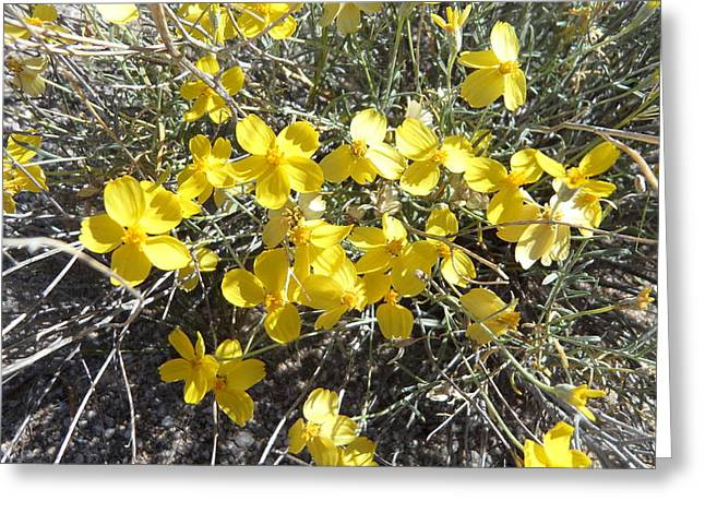 Greeting Card featuring the photograph Wild Desert Flowers by Kume Bryant