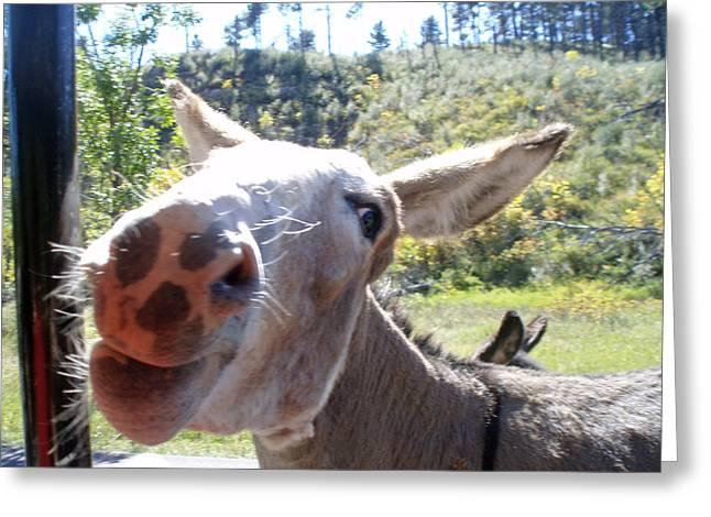 Wild Donkey Greeting Card