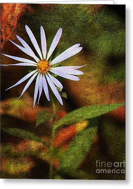 Wild Flower Greeting Card by Billie-Jo Miller