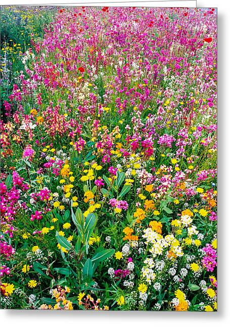 Wild Flowers 3 Greeting Card by Mike Penney