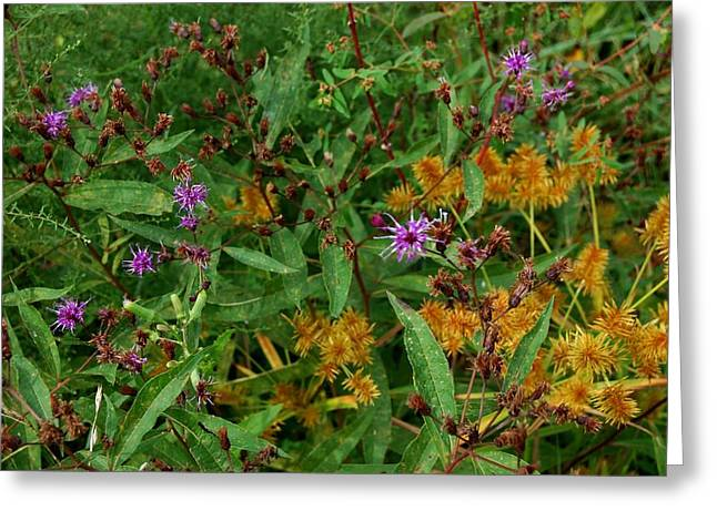Wild Flowers Greeting Card by Beverly Hammond