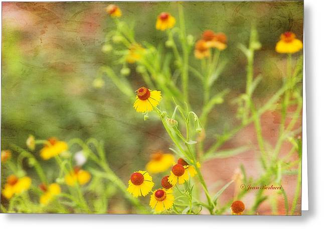 Greeting Card featuring the photograph Wild Flowers by Joan Bertucci