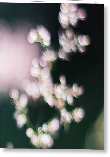 Wild Grass II Greeting Card by Andy Prendy