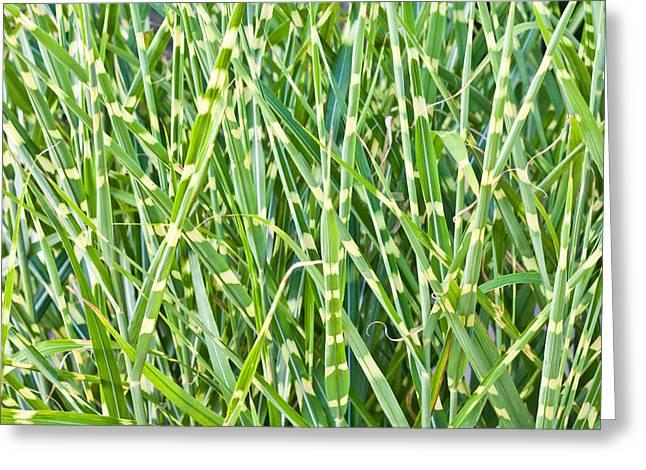 Wild Grass Greeting Card by Tom Gowanlock