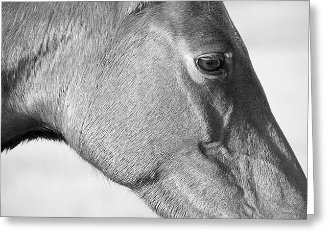 Wild Horse Intimate Greeting Card