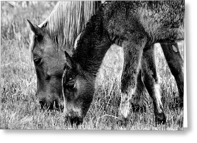 Wild Horses 1 Greeting Card by Mickey Hatt