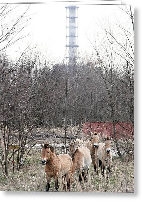 Wild Horses Near Chernobyl Greeting Card by Ria Novosti
