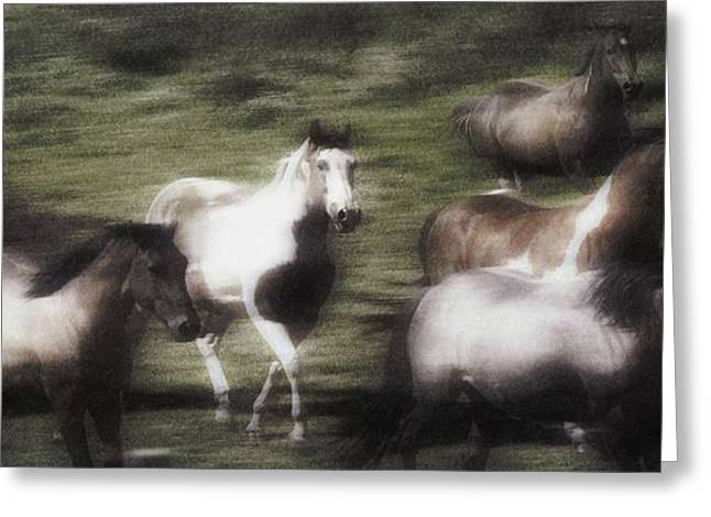 Wild Horses On The Move Greeting Card by Don Hammond